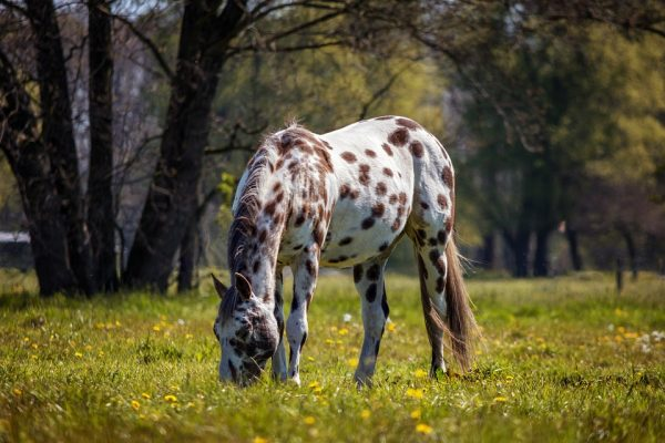 Keeping a Horse Alone – 5 Tips