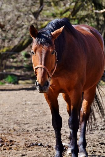 Apple Cider Vinegar for Horses – Top 10 Uses