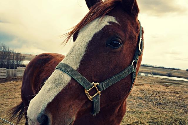 What You Should Know Before Buying a Horse