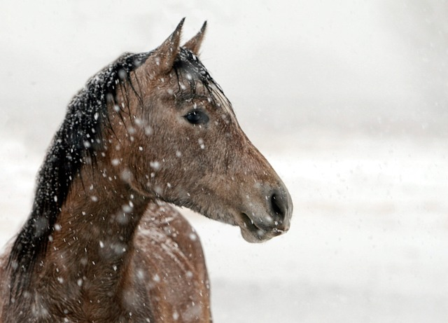 Horses in Winter – 5 Helpful Care Tips
