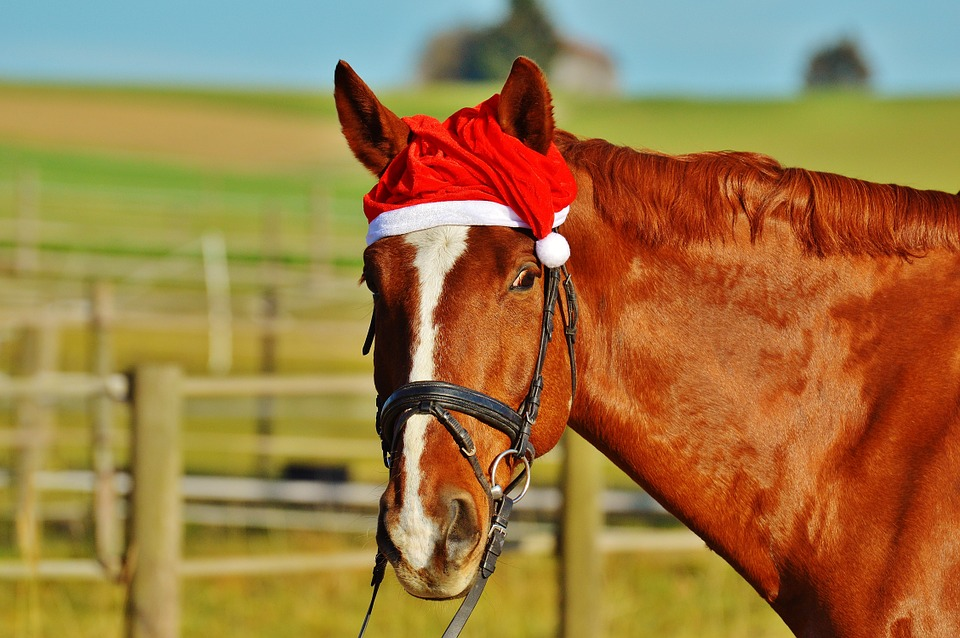 Horse Movies to Watch This Christmas