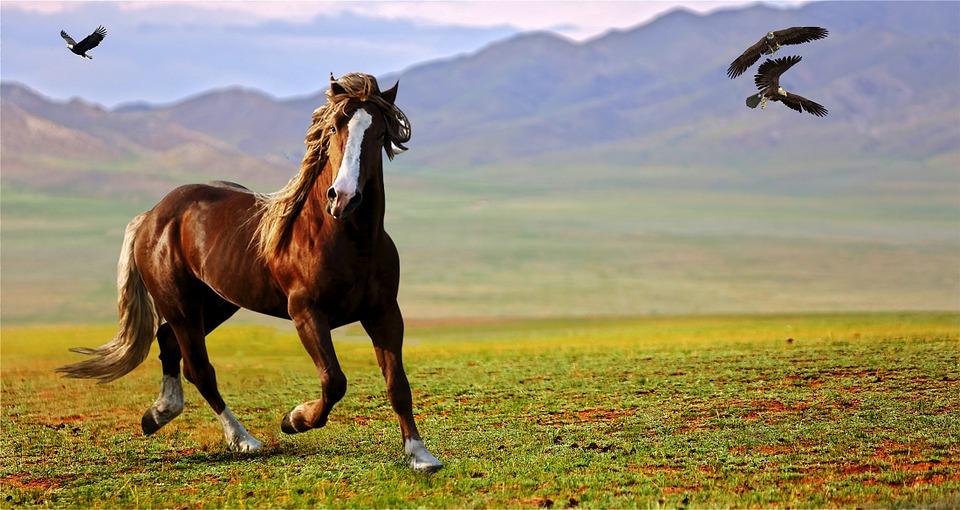 Natural Fly Spray for Horses + DIY Recipes