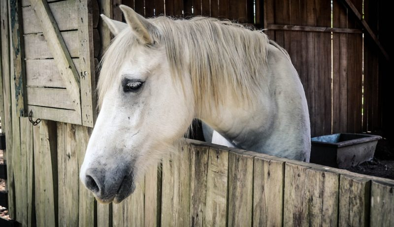 10 DIY Horse and Barn Hacks – Try Them Today!