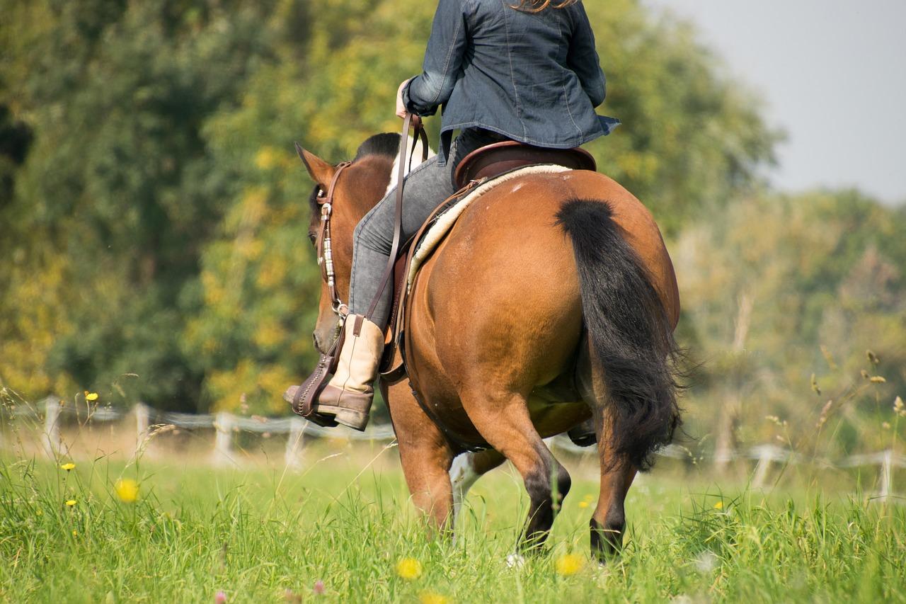 Geranium Oil for Horses – Natural Tick Prevention