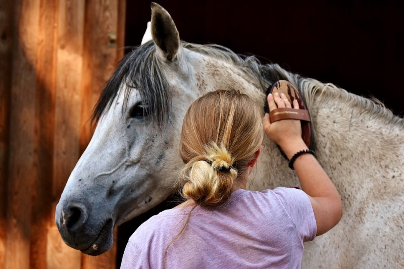 Savvy Guide to DIY Horse Care