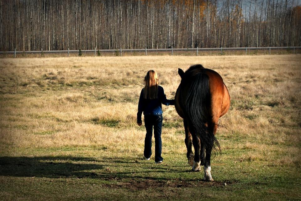 DIY Horse Care Recipes
