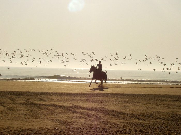 English vs Western Horseback Riding – Which is Easiest?