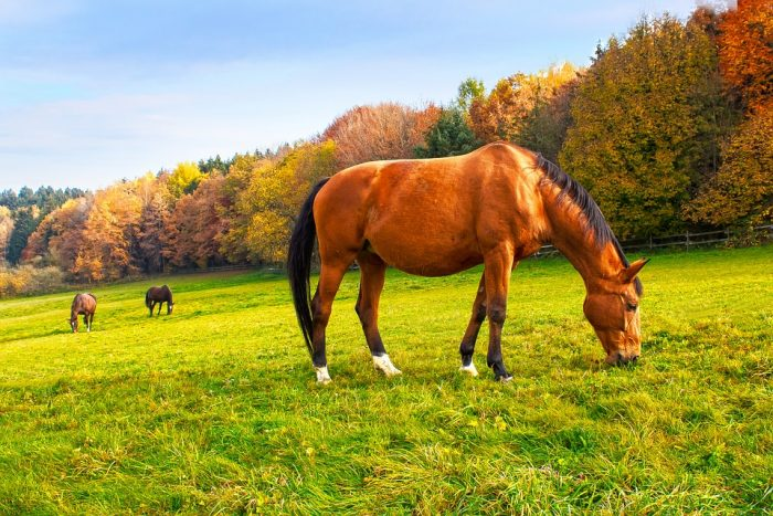 Horses in Autumn – 3 Fall Feeding Tips