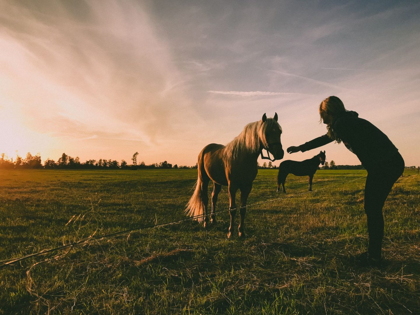 Horse Abuse – How to Rehabilitate an Abused Horse
