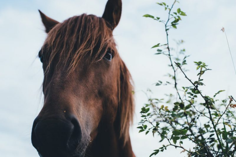Tips to Keep Your Horse Happy & Healthy