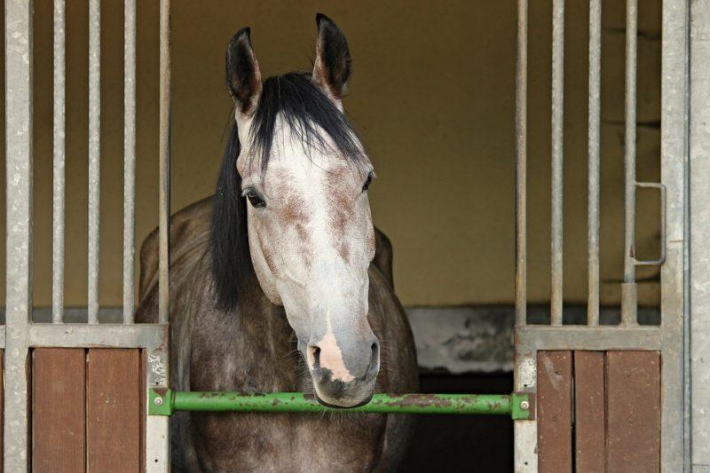 Toxic Shavings for Horses