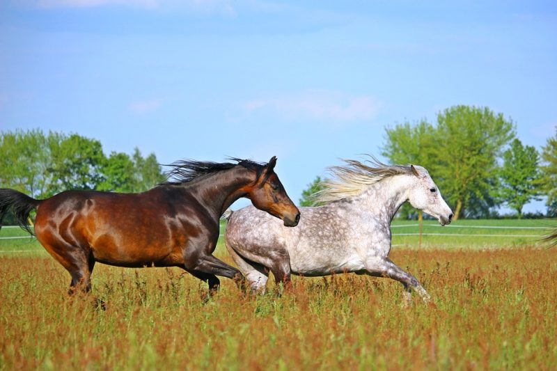 How Many Horses Per Acre? 5 Things To Consider