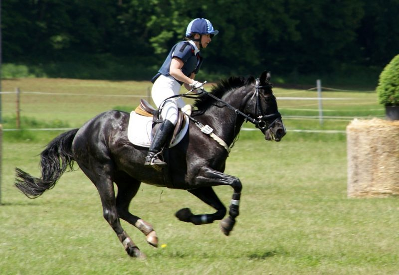 Horseback Riding is a Sport [5 Reasons Why]