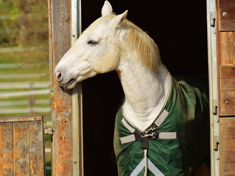 Springtime Body Clipping: Can You, or Should You, Clip Your Horse in the Spring?